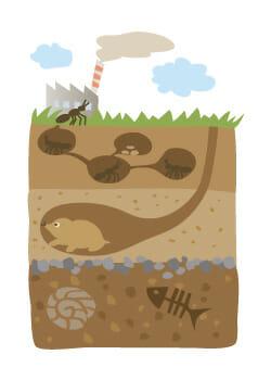 アリの巣 モグラの巣 イメージ